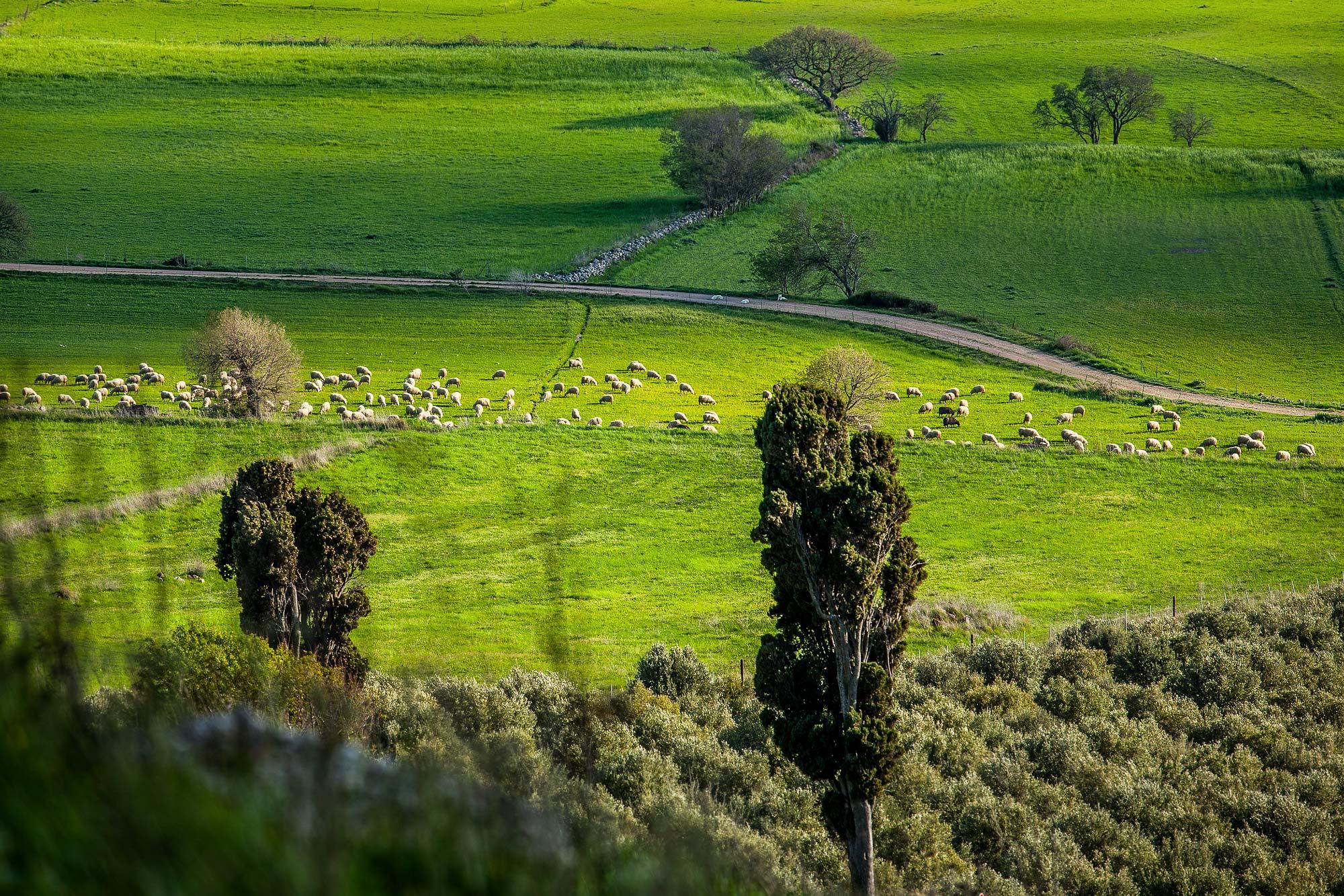 Unione pastori Nurri